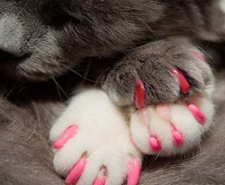 Soft Nail Caps For Cat Claws * PAWS OFF * USA SELLER