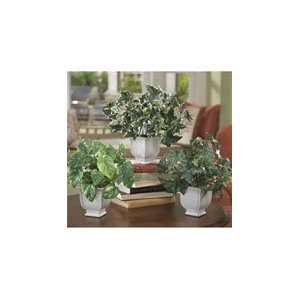 Set of 3 Ivy Accents