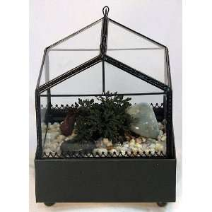 Gothic House Terrarium (Wardian Case) with Ruby Red Club